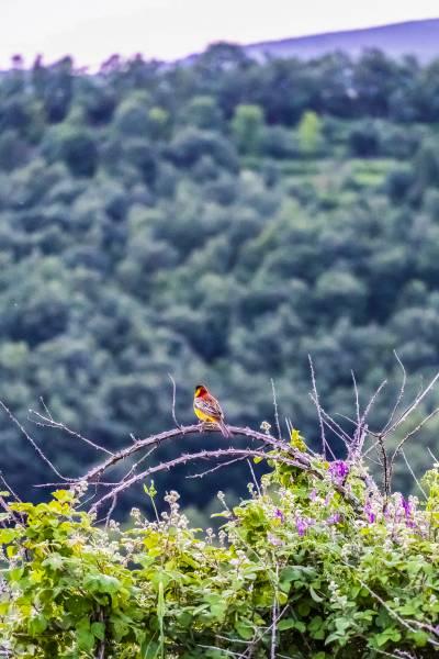 Bird at sundawn