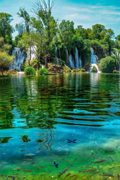 Fish at Kravice Waterfalls