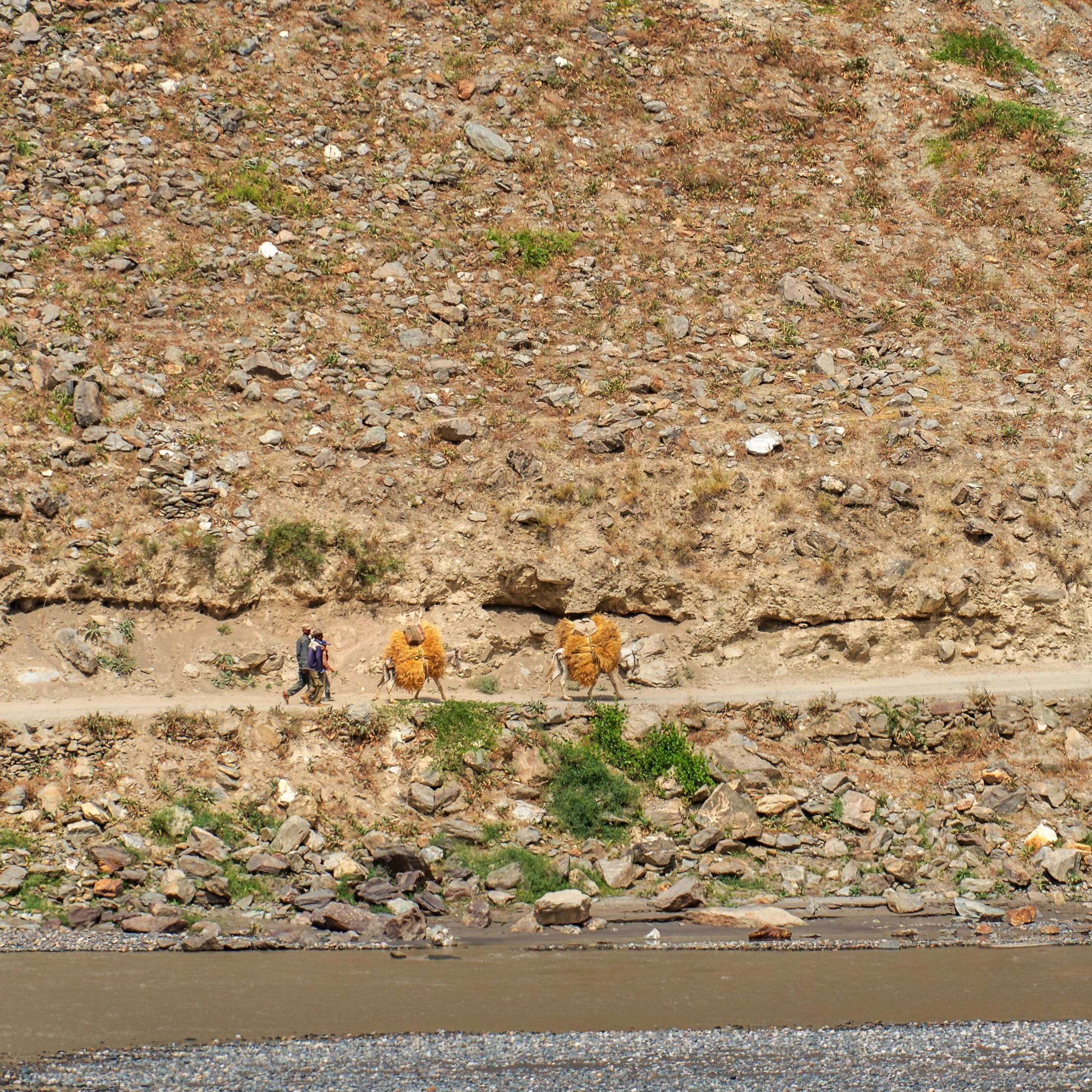 Afghans transporting hay
