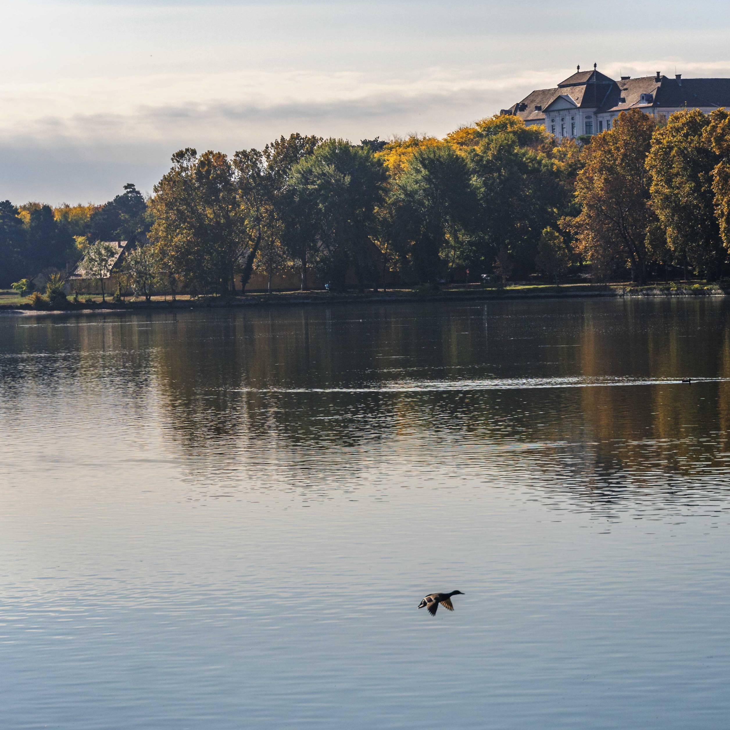 Tatai Lake, Hungary