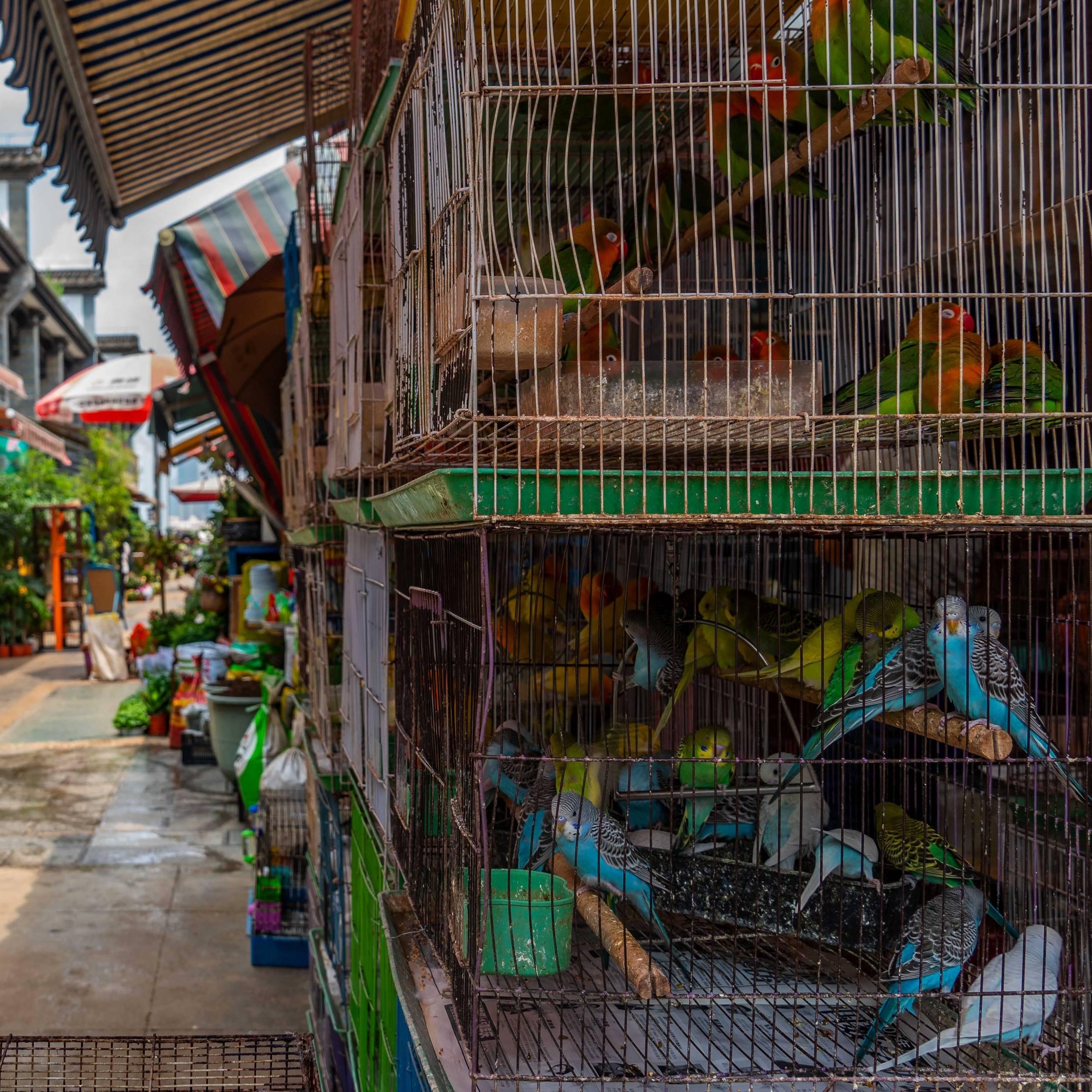 Bird and Flower Market, Kunming, Province Yunnan