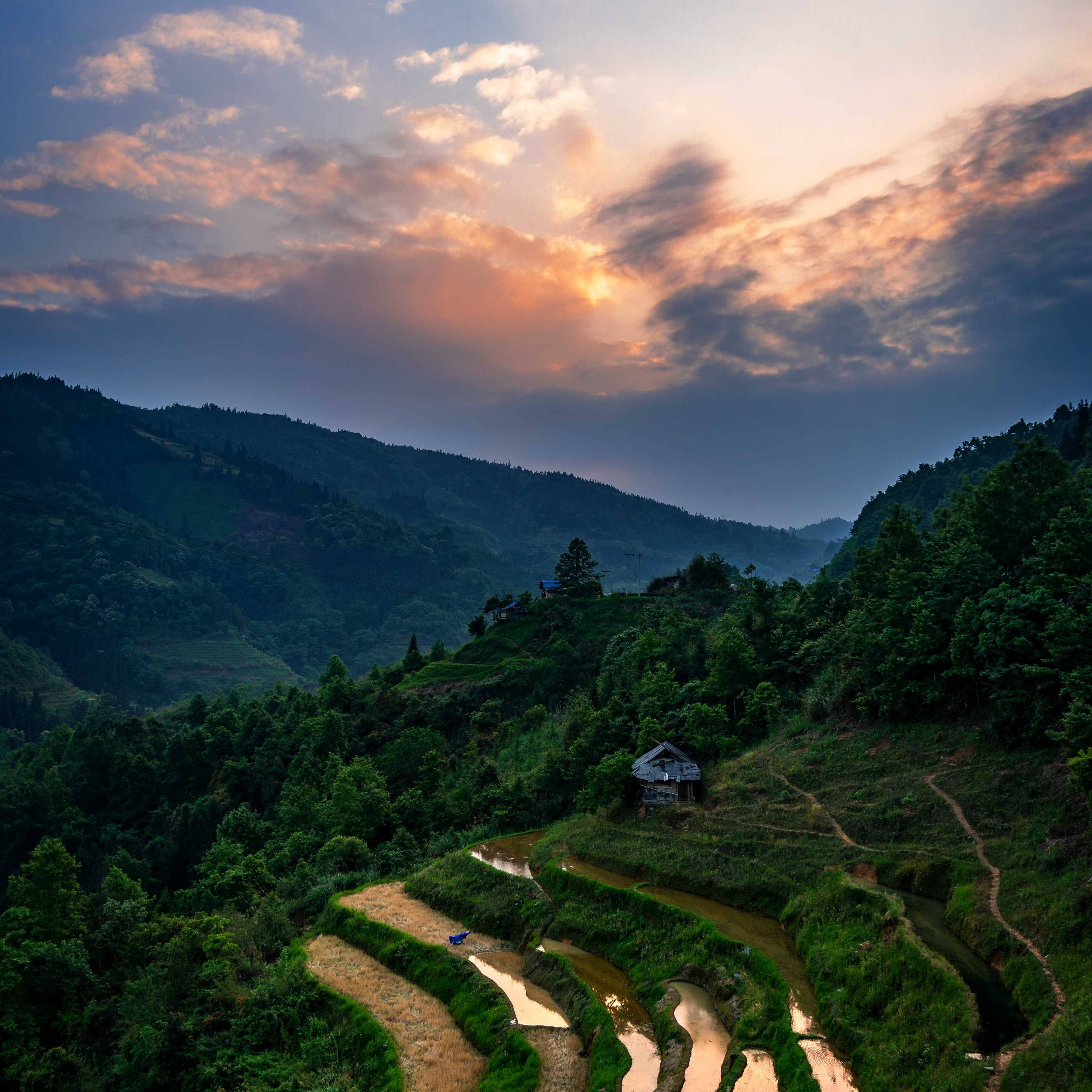 Rice terraces, Province Yunnan
