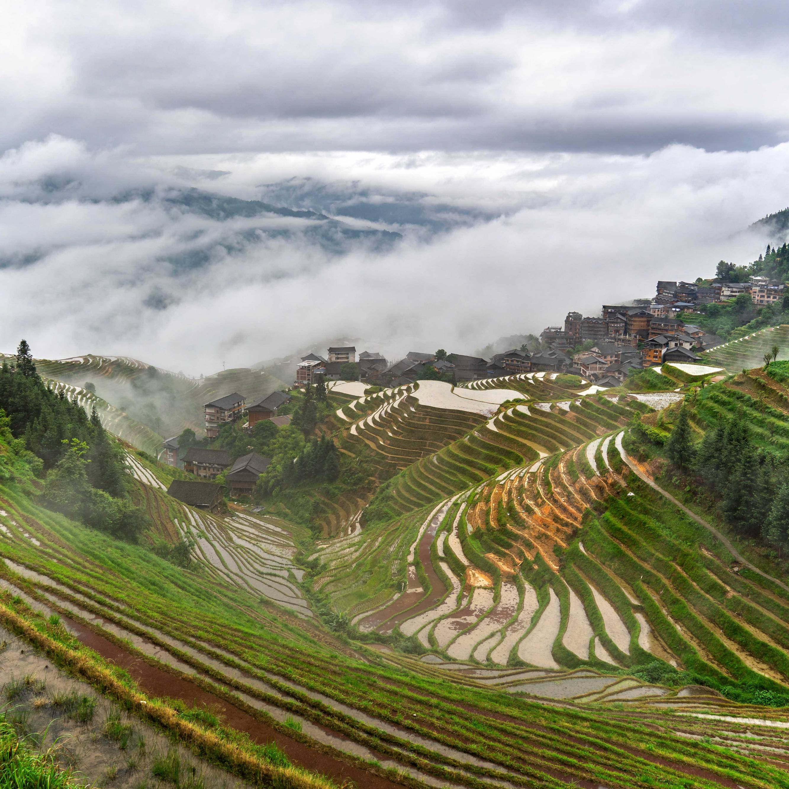 Nine Dragons And Five Tigers Rice Terraces