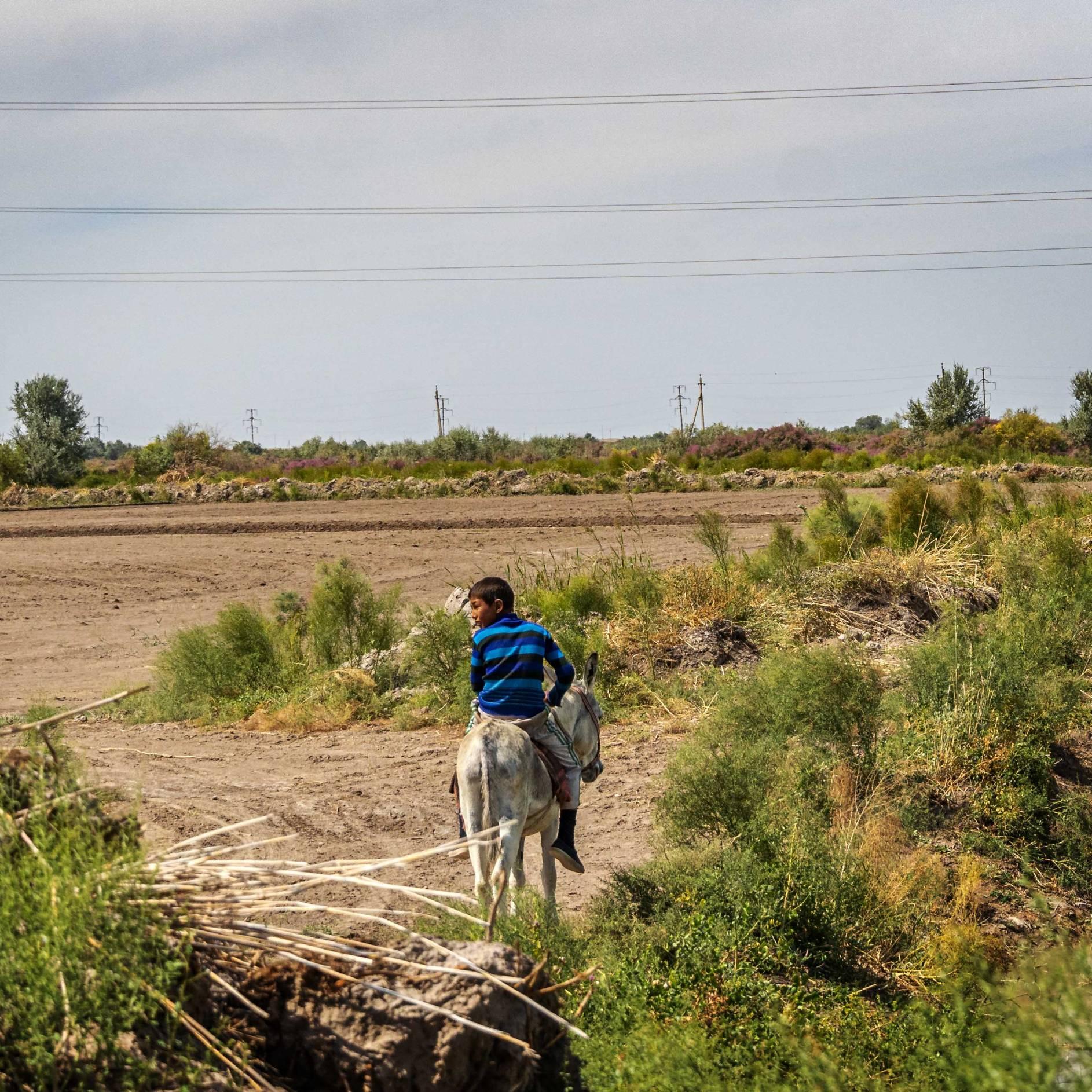A boy on a donkey