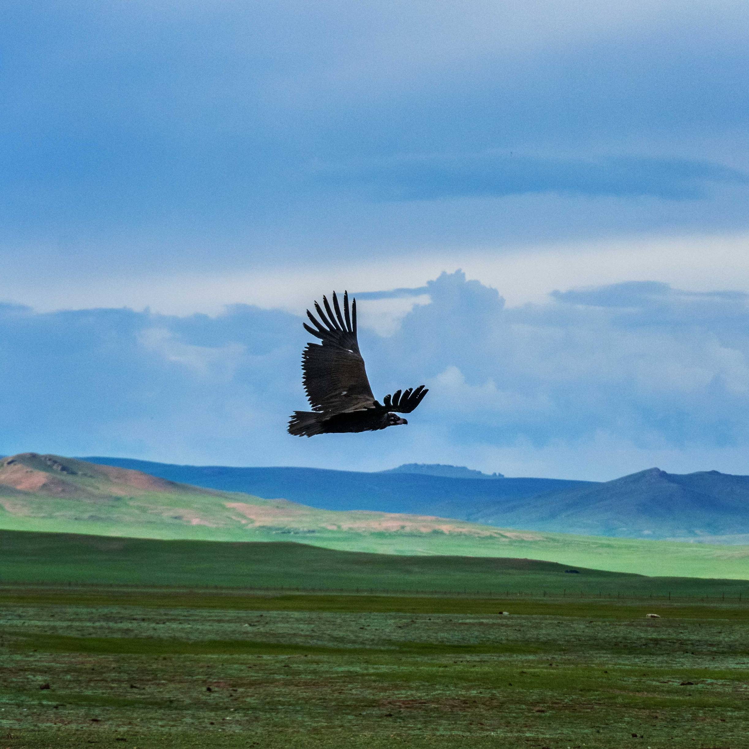 Wild Eagle over the Vastness